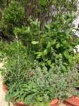 herb garden two
