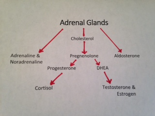 adrenals1