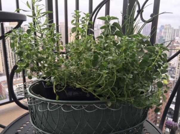 herbs Estrogen